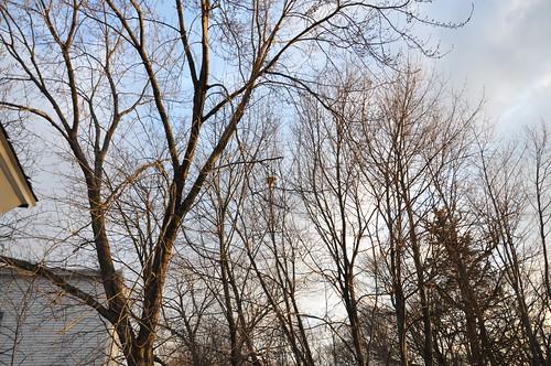 Bird's Nest #2