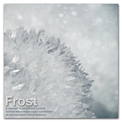 Frost - Dictionary of Image (s0ulsurfing) Tags: winter snow abstract blur cold art ice sparkles photoshop canon square island snowflakes idea frozen words cool focus frost dof bokeh text snowstorm january freezing blurred twinkle ps minimal sparkle isleofwight definition font layers snowing minimalism bec isle dictionary minimalist sparkling squared edit wight shimmering icecrystals shimmer 2010 doi hbw s0ulsurfing focusschmocus infinestyle bokehwhores thedictionaryofimage bokehschmokeh snowkeh