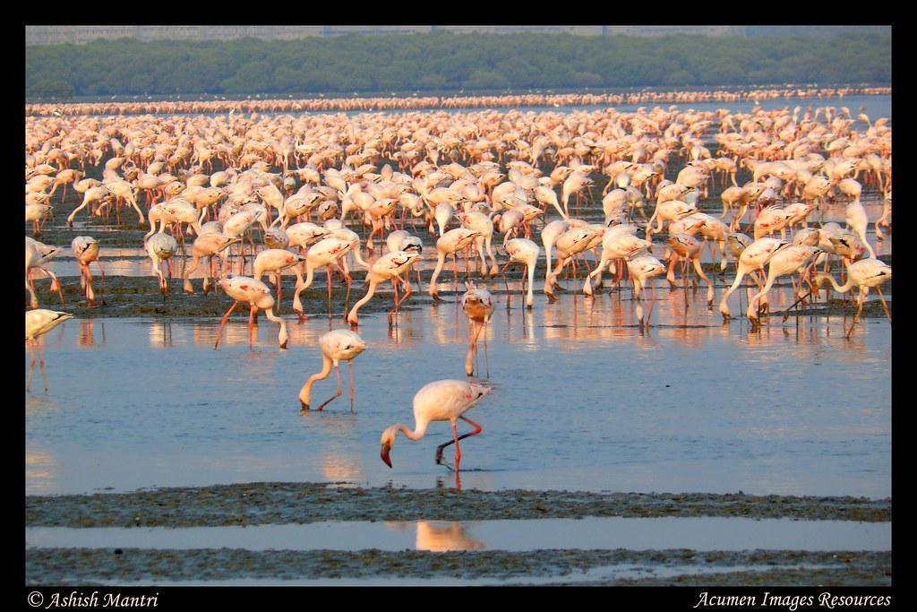 Flamingoes Poster