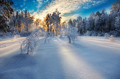 Winter Light (Latyrx) Tags: from blue trees light shadow snow nature colors photoshop suomi finland landscape photography photo high nikon frost day shadows dynamic angle graphic details stock wide perspective sigma explore just filter same another finnish 1020mm sell untouched range frontpage hdr mikko 2010 hoya polarization resize latyrx d90 3exp nikond90 mikkolagerstedt