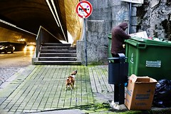 (morning lord) Tags: poverty street dog portugal loneliness homeless fame hunger suburbs lonely viaggio oporto viajar clochard portogallo povert nourishment viaggiare morninglord davidegreco