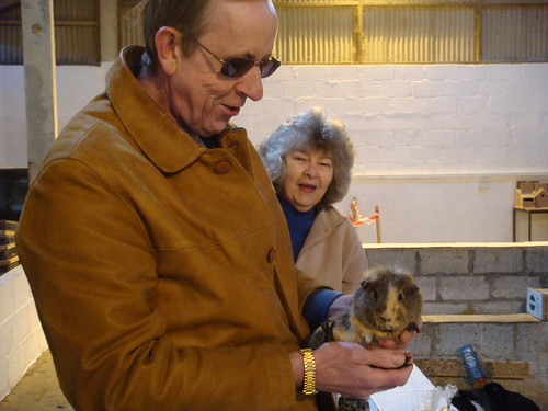 Dad catches a guinea pig for Owen to see