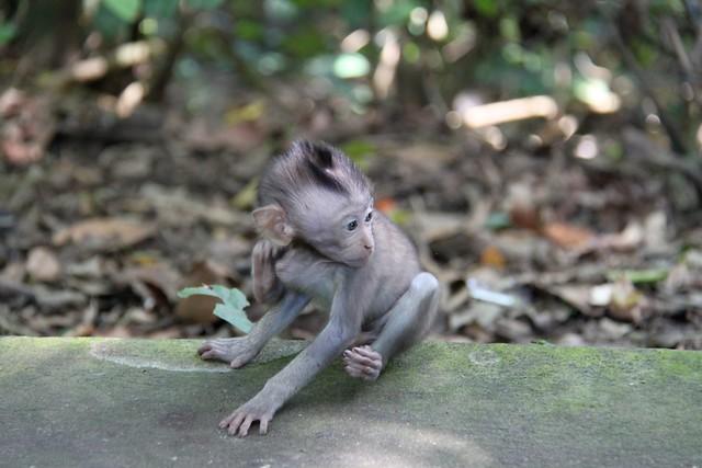 Sacred Monkey Forest Ubud7