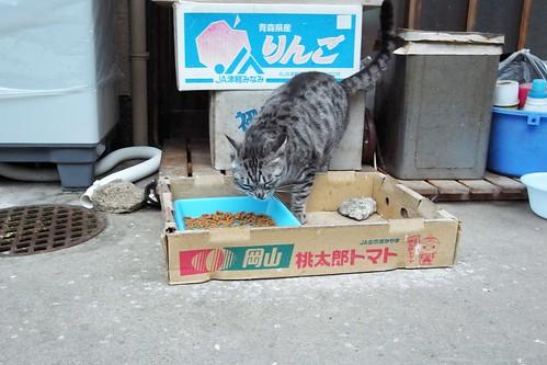 Today's Cat@2010-02-26