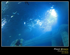 Sealife 009 (Nuno-Gomes) Tags: life light sea fish water aquarium interesting fantastic bestof underwater shot great best explore porto greatshot colored cave oporto oceanarium peixes oceanario nunogomes excelent mygearandmepremium mygearandmebronze mygearandmesilver sealifeporto mygearandmegold mygearandmeplatinum mygearandmediamond ngomes