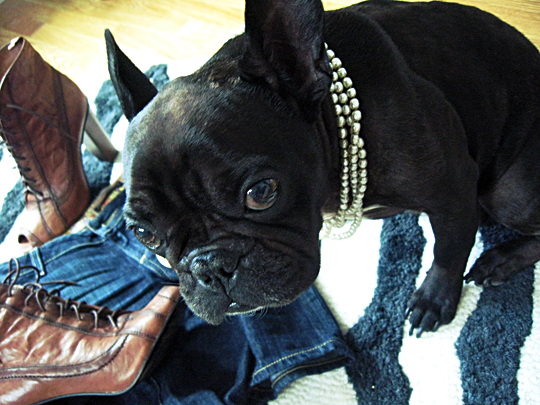 sam edelman boots french bulldog