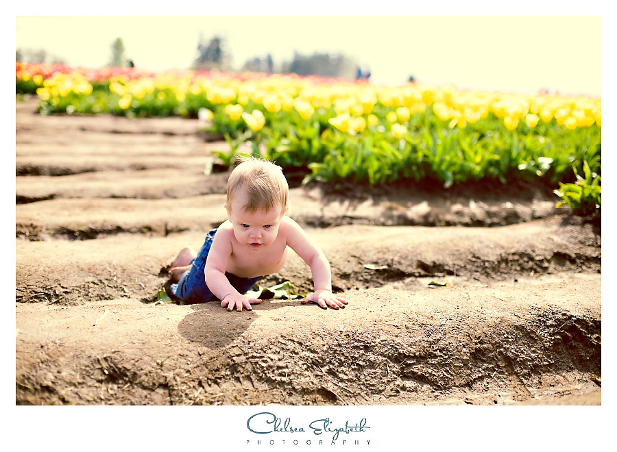 toddler crawling through tulip field