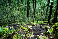 Forest (Inewcom) Tags: trees plants green nature oregon forest moss rocks butte eugene trail spencers