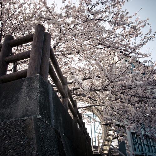 Locke, Blossom, Canal