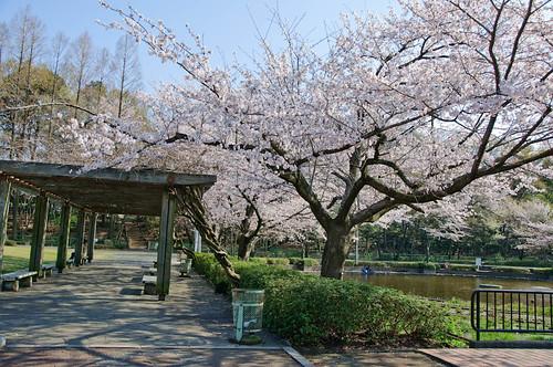 Sagiyama Kinen park