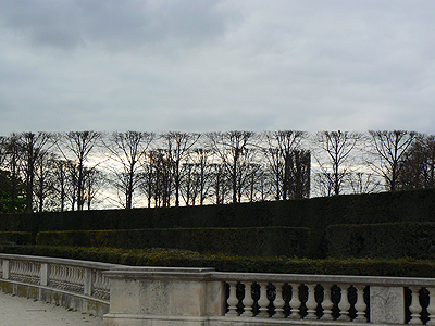 arbres taillés.jpg
