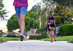 run ! (Laurarama) Tags: dog feet nikon child walk running run