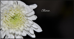 flower (Beroo.z) Tags: gadgetgirl
