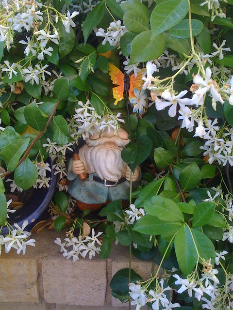 My butterfly gnome in my jasmine