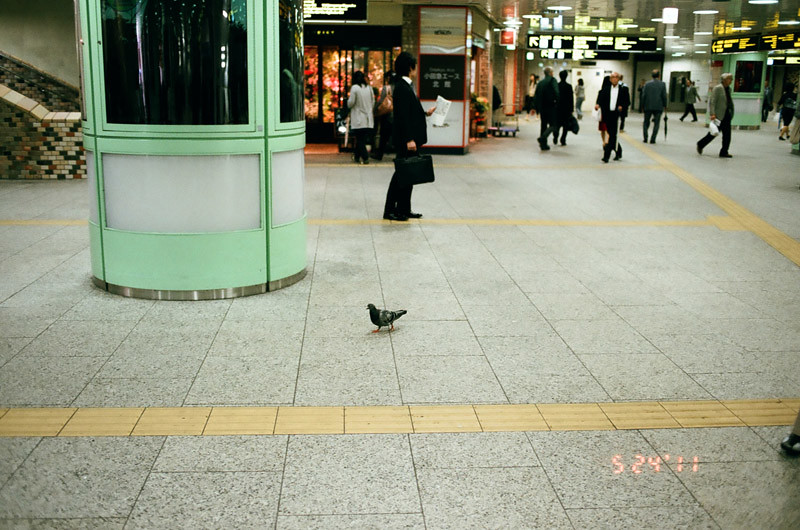 PigeonShinjukuStation (2 of 13)