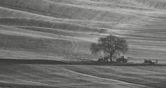 Tree and tractor (hbothmann) Tags: toskana tuscany toscana cretesenesi tractor tree baum traktor