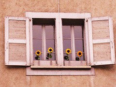 (: Gnaydn...Goodmorning :) (anemon :)) Tags: window sunflower goodmorning pencere gnaydn ayiei swisshouses