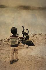 SAIF (irfan cheema...) Tags: china pakistan boy lake texture kid swan shanghai saif mywinners irfancheema familygetty2010