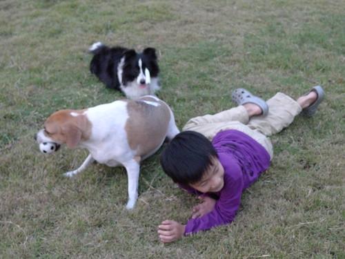 """BORDER COLLIE"" 邊界牧羊犬"