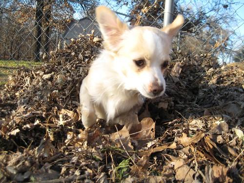compost dog