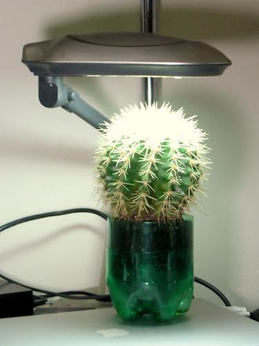 CactusClayPot-2