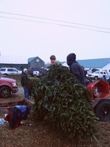 tree bundling