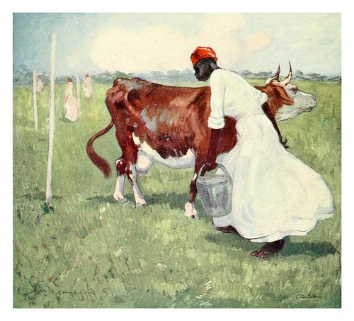 007- Ordeñando vacas en Barbados-The West Indies 1905- Ilustrations Archibald Stevenson Forrest