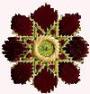 cirque flower