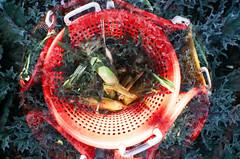 2009_doubles_03 (Ramune Rastonis) Tags: orange film vegetables virginia lomography corn experimental basket doubleexposure fisheye cabbage dcist kodakhd400 creativeproject everyseven