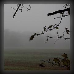 Autumn Mist (innpictime  ) Tags: autumn mist tree fall field orchard sycamore