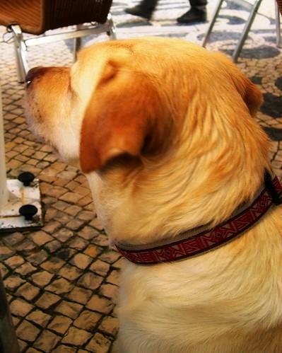 Good dog ;-)