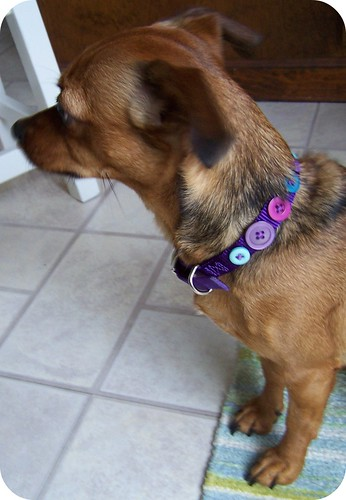 pet button collar