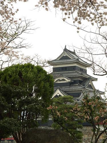 松本城和櫻花