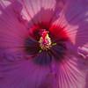 Jammin' on the floral flugelhorn (alan shapiro photography) Tags: pink flower macro beauty closeup flora colorful blossom bloom alanshapiro masterphotos momentsoftruth ashapiro ashapiro515 ©2010alanshapiro alanshapirophotography wwwalanwshapiroblogspotcom ©2010alanshapirophotography
