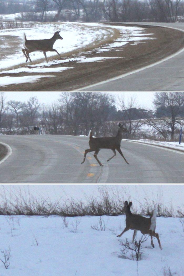02-08-deer1