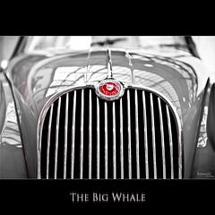 [ The Big Whale ] (bonnix (Scotty)) Tags: nikond70 whale jaguar xk150 nikkor247028 meilenwerkbblingen