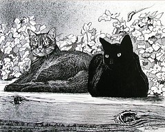 Pals-Snig & Knucklehead (bdycttdncr) Tags: friends summer portrait cats animals closeup blackcat watercolor shadows siamesecat penandink crosshatching tabbycat spattering woodtexture penstrokes sparklingeyes inkrendering knotsinwood strokesforcatfur penstrokesforshading