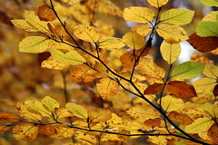 Fall I