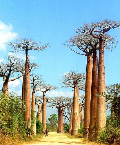 Une découverte de Madagascar vous réserve des souvenirs inoubliables