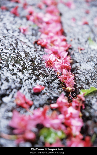 陽明山花卉試驗中心07.jpg