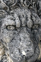 Lion face (Thad Zajdowicz (Thanks for 1.7 million+ views!)) Tags: sculpture art animal statue stone dc washington eyes decoration lion georgetown stern