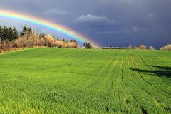 Cash Crop (Team Hymas) Tags: sky green rain dark washington spring rainbow day fields crops ridgefield shirleen