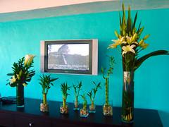 3 (D'Francia Floreria) Tags: floral hotel restaurante oficina tropical calas blancos residencia lilis minimalista ambiental tonos arreglo exotico alcatraces