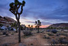 Evening Solace (James Neeley) Tags: california landscape hdr joshuatreenationalpark 5xp jamesneeley mountainhighworkshops