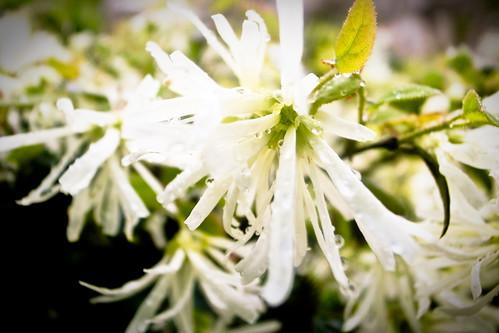 百草园中的花朵