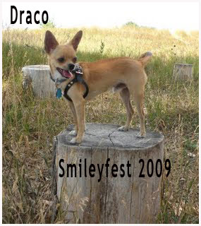 43---Draco---2