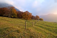 enter the autumn room (gregor H [PRO EX]) Tags: autumn trees sunset mist nature fence landscape liechtenstein deciduoustrees balzers autumnroom