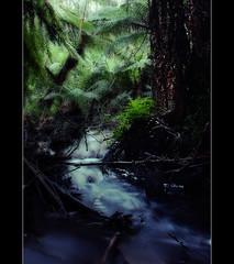 ~ lush ~ (~wishiwasanotter~) Tags: water stream flowing ferns wishiwasanotter