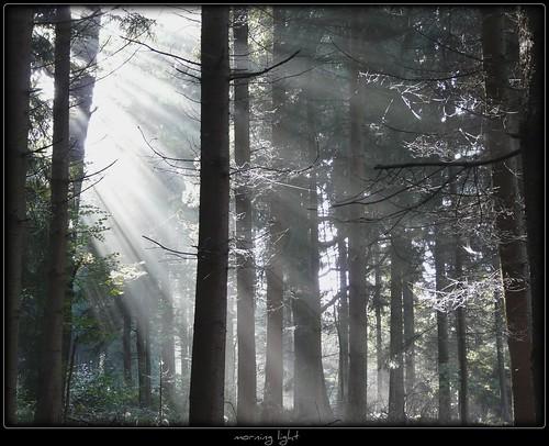Morgenlicht - morning light