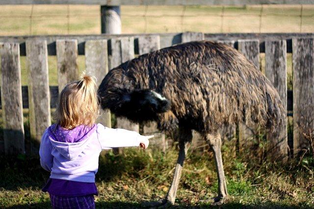 bye emu
